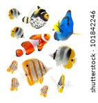 Reef Fish  Marine Fish Isolate...