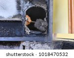 man cleaning wood burning stove.... | Shutterstock . vector #1018470532
