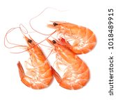 shrimps on a white background | Shutterstock . vector #1018489915