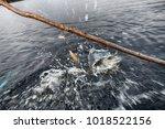 Procedure Of Pike Fishing In...