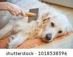 woman combs old golden... | Shutterstock . vector #1018538596