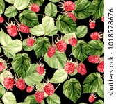 beautiful watercolor raspberry...   Shutterstock . vector #1018578676