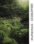 lush vegetation on forest floor ... | Shutterstock . vector #1018639585