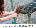 girl volunteer in the nursery... | Shutterstock . vector #1018649122