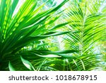 sun light through palm branches ...   Shutterstock . vector #1018678915