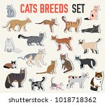 vector breed cats icons sticker ... | Shutterstock .eps vector #1018718362