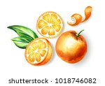 fresh orange  fruit top view... | Shutterstock . vector #1018746082