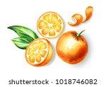 fresh orange  fruit top view... | Shutterstock . vector #1018746082