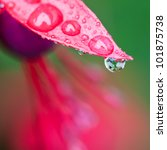 A Close Up Of Raindrops On A...