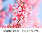 pink flowers on blue background | Shutterstock . vector #1018779298