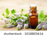 fresh purple peppermint flowers ... | Shutterstock . vector #1018803616