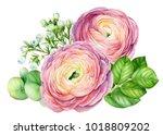 bouquet of flowers  watercolor... | Shutterstock . vector #1018809202