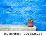 blue painted wall and flower in ... | Shutterstock . vector #1018826296