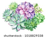 composition of succulents ... | Shutterstock . vector #1018829338