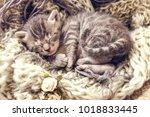 Stock photo sweet bengal kitten 1018833445