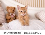 Stock photo sweet bengal kitten 1018833472