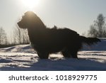Dog In The Snow. Silhouette...
