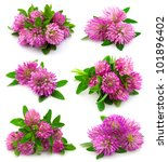 Red Clover Flower And Leaves...
