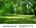 beautiful meadow in the park | Shutterstock . vector #1018971775