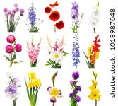 Collection Beautiful Flowers Assorted Delphinium - Fine Art prints