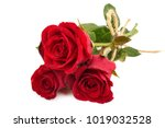 Stock photo red rose isolated on white background 1019032528