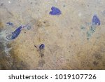 abstract pattern from the... | Shutterstock . vector #1019107726