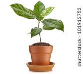 young green seedling ...   Shutterstock . vector #101912752
