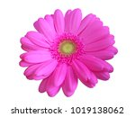 big flower close | Shutterstock . vector #1019138062
