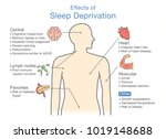 diagram of effects of sleep... | Shutterstock .eps vector #1019148688