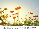 warm sunshine relaxing... | Shutterstock . vector #1019155762