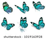 Stock photo beautiful six monarch butterflies set isolated on white background 1019163928