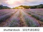 lavender field in mountainous... | Shutterstock . vector #1019181802