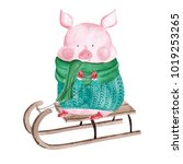 watercolor pig in sweater on... | Shutterstock . vector #1019253265