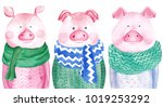 watercolor collection of pigs... | Shutterstock . vector #1019253292