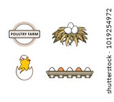 vector flat farm poultry...   Shutterstock .eps vector #1019254972