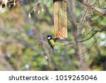 great tits on bird feeder on... | Shutterstock . vector #1019265046