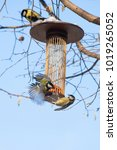 great tits on bird feeder on... | Shutterstock . vector #1019265052