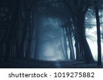 smokey lane in the forest | Shutterstock . vector #1019275882