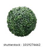 green bush sphere isolated on... | Shutterstock . vector #1019276662