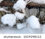 fluffy snow on the tree ... | Shutterstock . vector #1019298112