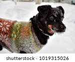 a small dog in a sweater | Shutterstock . vector #1019315026