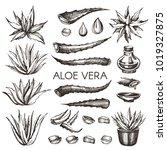 vector hand drawn  aloe vera.  | Shutterstock .eps vector #1019327875