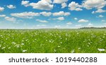 Fields With Flowering Flax And...
