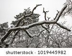 close up on a branch in... | Shutterstock . vector #1019445982