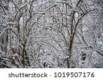 winter landscape with snow   Shutterstock . vector #1019507176