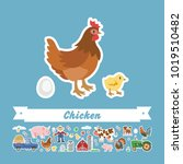 cartoon chicken vector flat... | Shutterstock .eps vector #1019510482