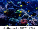 tropical fish on a coral reef.... | Shutterstock . vector #1019519926