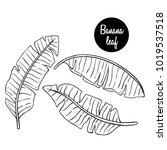 black and white banana leaf...   Shutterstock .eps vector #1019537518