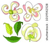 set  is florida dogwood flower  ... | Shutterstock .eps vector #1019542528