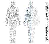 hand drawn human anatomy... | Shutterstock .eps vector #1019583088